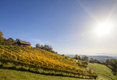 Weinberg auf Schilcher-Weinweg mit einigen traditionellen alten Hütten Stockfotografie