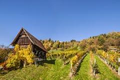 Weinberg auf Schilcher-Weinweg mit traditioneller alter Hütte und Kiloliter Lizenzfreie Stockbilder
