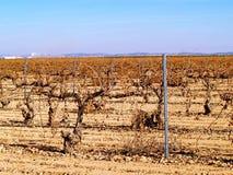 Weinberg auf Winter in Spanien Stockfoto