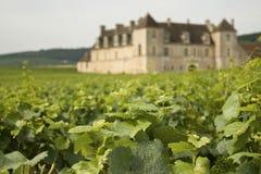 Weinberg, Bourgogne Burgunder. Lizenzfreies Stockfoto