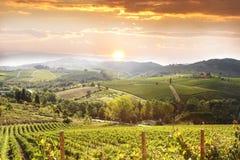 Weinberg in Chianti, Toskana Lizenzfreies Stockfoto