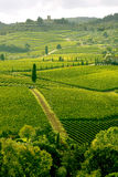Weinberg in Chianti, Toskana, Italien Stockbilder