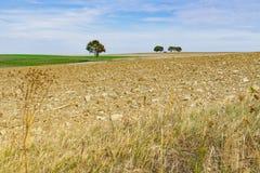 Weinberg in den Herbstfarben entlang Weg nannte Weinstrasse, Deutschland stockfoto