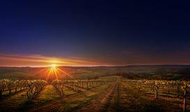 Weinberg in der Adelaide Hills-Weinregion, Süd-Australien Stockfotos