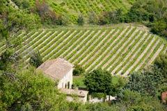 Weinberg in Frankreich Stockbild