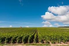 Weinberg in Frankreich Stockfotos