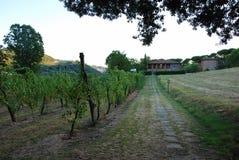 Weinberg in IL Cardello - Casa Oriani-Zustand stockbild