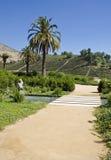 Weinberg im Aconcagua-Tal Chile Stockfotografie