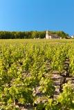 Weinberg im Bordeaux, Frankreich Stockbilder