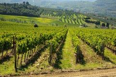 Weinberg im Chianti, Toskana-Region stockbild