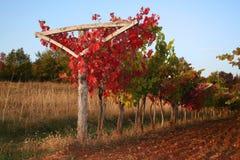 Weinberg im Herbst Stockbild