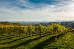 Weinberg im Herbst vor den Skylinen von Wien in Österreich Lizenzfreies Stockfoto