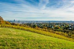 Weinberg im Herbst vor den Skylinen von Wien in Österreich Lizenzfreie Stockfotografie