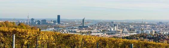 Weinberg im Herbst vor den Skylinen von Wien in Österreich Stockbild