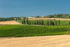 Weinberg im Orcia Tal, Toskana Lizenzfreies Stockfoto