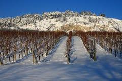 Weinberg im Schnee Lizenzfreies Stockfoto
