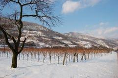 Weinberg im Winter mit Bergen Stockfotografie