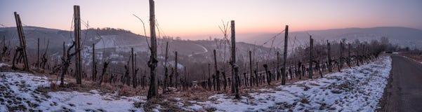 Weinberg im Winter mit Schnee in der blauen Stunde Stockfoto
