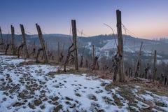 Weinberg im Winter mit Schnee in der Dämmerung Stockfotos