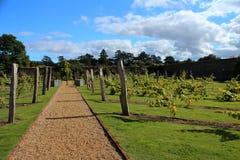Weinberg innerhalb eines Briten ummauerten Gartens Stockfotografie