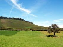 Weinberg-Landschaft Stockbilder