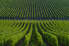 Weinberg-Landschaftbordeaux Viney Lizenzfreie Stockbilder