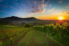 Weinberg mit buntem Sonnenaufgang in Pfalz, Deutschland Stockfoto