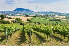 Weinberg mit monte titano von San- Marinohintergrund Stockbild