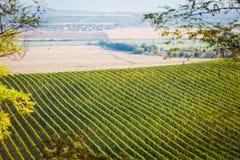 Weinberg mit nahe gelegenen Feldern Lizenzfreie Stockfotografie