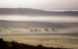 Weinberg mit Nebel Stockfoto