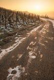 Weinberg mit Reben im Winter im vertikalen Format Stockfotos