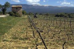 Weinberg am Mont Ventoux, de Provence, Frankreich Royalty-vrije Stock Foto