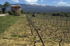 Weinberg Mont Ventoux, Provenza, Frankreich Fotografia Stock Libera da Diritti