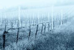 Weinberg nach Beschneidung mit Nebel stockfoto