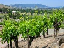 Weinberg Napa Valley CA Lizenzfreie Stockbilder
