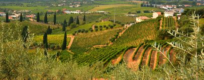 Weinberg am Peso DA Regua in Alto Douro Wine Region, Portugal stockfoto