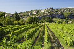 Weinberg Provence Lizenzfreie Stockfotografie