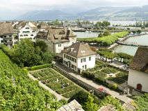 Weinberg in Rapperswil Stockbilder