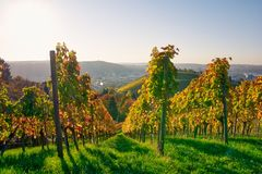 Weinberg-Reihen-Wein-draußen Tagesändernder Jahreszeit-Fall-Herbst stockfotos