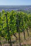 Weinberg in Rheinland Pfalz Stockfotos