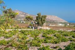 Weinberg Santorini Insel, Griechenland Lizenzfreie Stockbilder