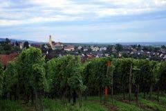 Weinberg in Schwarzwald Stockbild