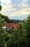 Weinberg in Schwarzwald Stockfotos
