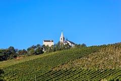 Weinberg in Sierre, Wallis, die Schweiz Stockfoto