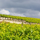 Weinberg in Sizilien Lizenzfreies Stockfoto