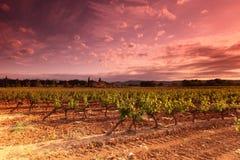 Weinberg-Sonnenuntergang in Frankreich Stockbilder