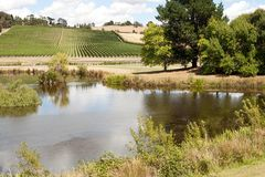 Weinberg Tasmanien stockfoto