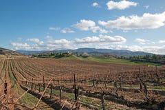 Weinberg in Temecula in Süd-Kalifornien USA lizenzfreie stockfotografie
