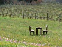 Weinberg in Toskana Italien Stockfotos