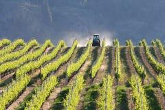Weinberg-Traktor, Okanagan, BC. Lizenzfreie Stockfotografie